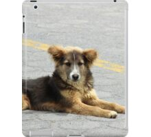 Stray Brown Dog on the Street iPad Case/Skin