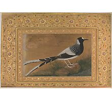Spotted Forktail, Folio from the Shah Jahan Album , Painting by Abu'l Hasan, india Photographic Print