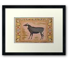 Study of a Nilgai (Blue Bull), Folio from the Shah Jahan Album Framed Print