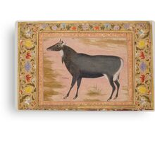 Study of a Nilgai (Blue Bull), Folio from the Shah Jahan Album Canvas Print