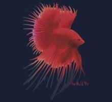Betta Splendens ;Siamese fighting Fish by Alex Gardiner