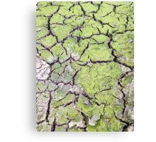 environmental concept, Water shortage and drought Dry cracked mud Canvas Print