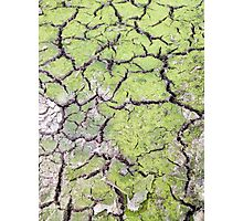 environmental concept, Water shortage and drought Dry cracked mud Photographic Print