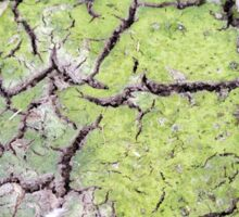 environmental concept, Water shortage and drought Dry cracked mud Sticker