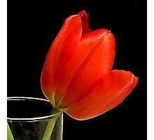 Tulip cocktail Photographic Print
