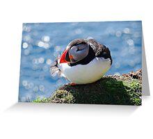 Puffin sitting resting, Shetland, Scotland Greeting Card