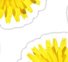 Yellow Daisy Wildflower Sticker