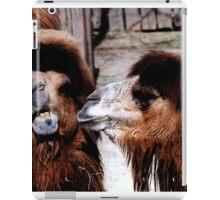 Marital Strife Among Camels iPad Case/Skin