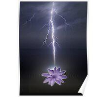 lotus love Poster