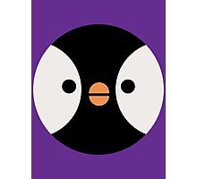 Pigeon Penguin Photographic Print