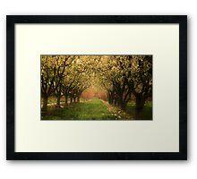 Fruitful Blooms of Spring Framed Print