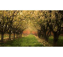 Fruitful Blooms of Spring Photographic Print