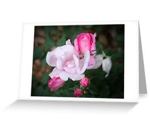 Roses In Different Stages Greeting Card