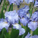 A garden in blue by Maria1606