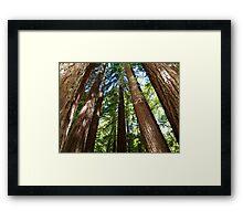 Giants Among Us Framed Print