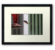 Precious Hummingbird Framed Print
