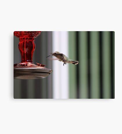 Precious Hummingbird Canvas Print