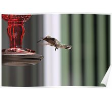 Precious Hummingbird Poster