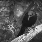 """QUOTH THE RAVEN """"NEVER MORE"""" by Diane Peresie"""