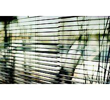 striped world no less beautiful Photographic Print
