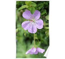Purple flower on a rainy day Poster