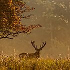 Red Stag at Woburn v2 by JMChown