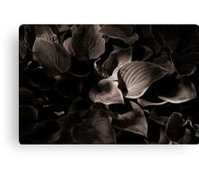 Streaming Through the Trees Canvas Print