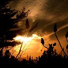 Golden Sunset by Elfriede Fulda