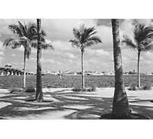 Yachts in a Row Photographic Print