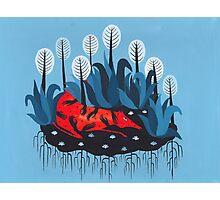Smug red horse 3. Photographic Print