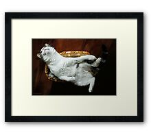 Silly Sophia... Just Hanging Out !! Framed Print