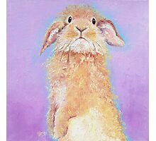 Rabbit painting - Babu Photographic Print