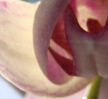 Under Orchid  Sticker