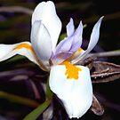 Wild iris with pods by ♥⊱ B. Randi Bailey