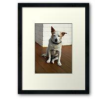 PUP - OLD JACK RUSSEL Framed Print