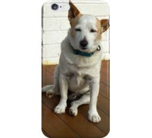PUP - OLD JACK RUSSEL iPhone Case/Skin