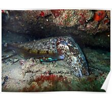 Cuttlefish - Omeo wreck Poster