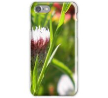 Opening Bud, Star Thistle iPhone Case/Skin