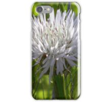 Young Star Thistle - Best Viewed Larger iPhone Case/Skin