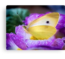 Yellow butterfly on purple flower Canvas Print