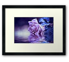 Purple rose and reflection in the water Framed Print