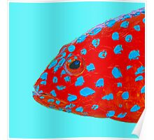 Strawberry Grouper Fish painting Poster