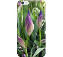 purple buds iPhone Case/Skin