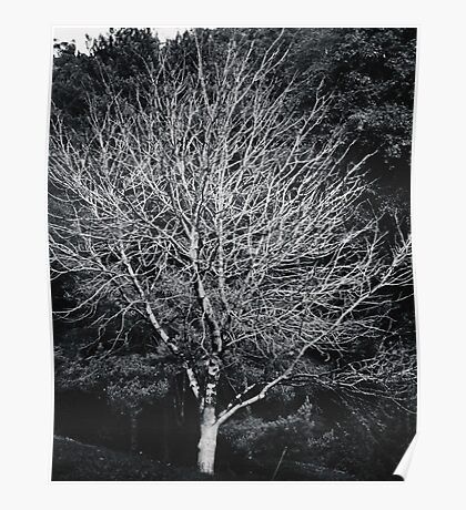 The Naked Tree Poster