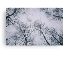 The last in the Trees Canvas Print
