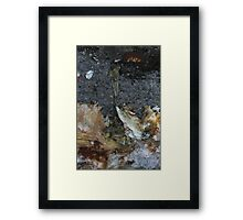 reaching out... Framed Print