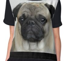 mops little dog Women's Chiffon Top