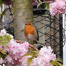 Robin in the Cherry Tree by AnnDixon