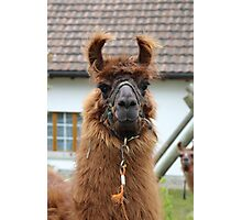 Llama Cell Phone Case - Sticker Photographic Print