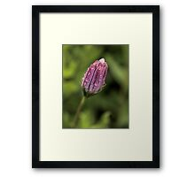 Raindrops on Daisies_2 Framed Print
